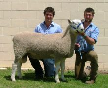 09 238 - Sold Dubbo to A Charlton $3500