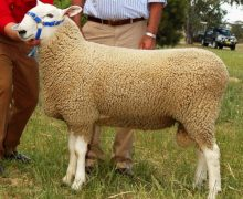 10 310tw-Sold to I Tonacia at Horsham $8000
