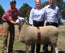 4th Horsham 2012 Purchased By R & T Willmott, Hanookra $4500