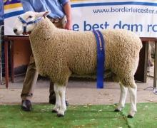 09 144 - Champion Horsham 2010