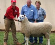 10 311tw Maverick- Equal Top Price Dubbo 2011 Sold to D & H Campbell $5500
