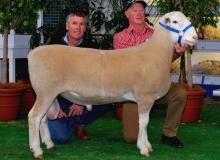 Big Thing Champ. Sydney 2012,1st Dubbo 2012, Adelaide- Purchased $11,000 Jandebrey
