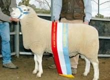 Extender Supreme Australian Sheep & Wool Show 2007