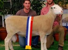 Target 110222ET- Junior Champion Adelaide Royal, half share sol to Bundara Downs
