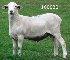 Collaroy 160030