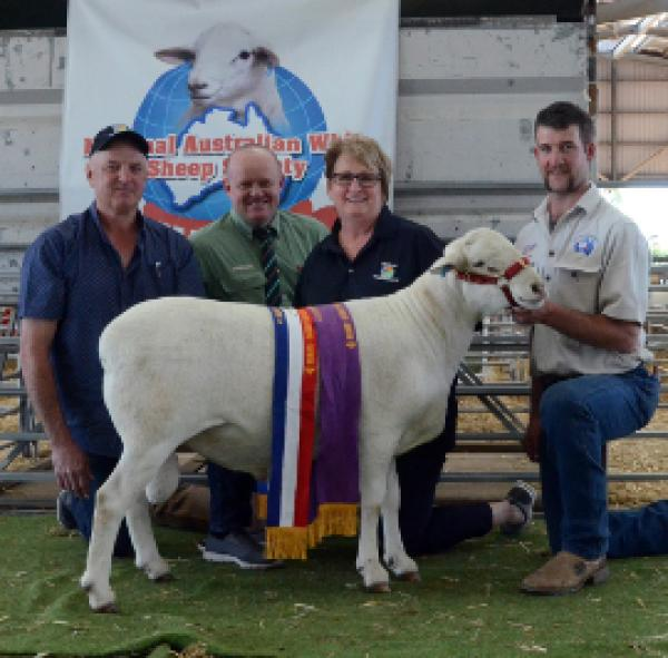 """National"" 15A027 Supreme Champion Ram. $9,000 - purchased by G & J Blohm"