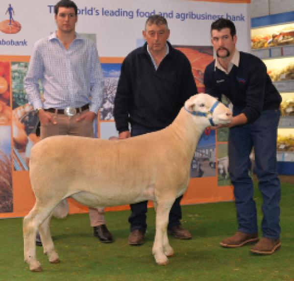 15P021 $4,000 Adelaide Elite Purchased by 'Westleigh'